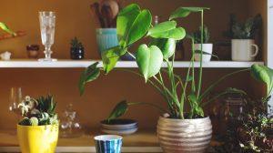 7 Feng shui plants